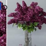 627 Plant 3dmodel 3dsmax