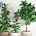 633 Plant 3dmodel 3dsmax