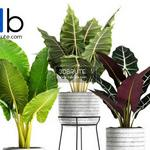 641 Plant 3dmodel 3dsmax
