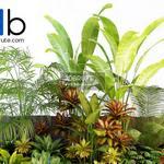 Tropical plants 3d model 3dsmax