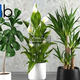Plant 3dmodel 3dsmax