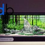 aquarium grass