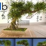 129 Plant 3dmodel 3dsmax
