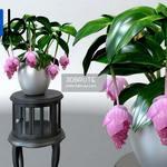 146 Plant 3dmodel 3dsmax