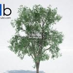 150 Plant 3dmodel 3dsmax