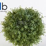 163 Plant 3dmodel 3dsmax