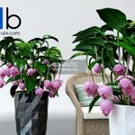 176 Plant 3dmodel 3dsmax