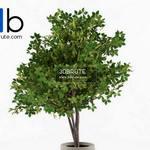 205 Plant 3dmodel 3dsmax