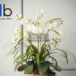 212 Plant 3dmodel 3dsmax