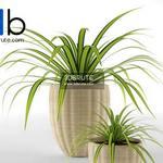 324 Plant 3dmodel 3dsmax
