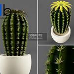 342 Plant 3dmodel 3dsmax