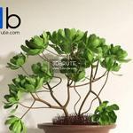 347 Plant 3dmodel 3dsmax