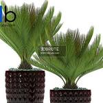 359 Plant 3dmodel 3dsmax