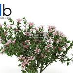 366 Plant 3dmodel 3dsmax