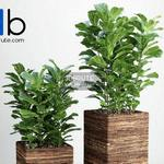 401 Plant 3dmodel 3dsmax
