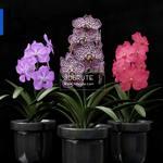 427 Plant 3dmodel 3dsmax