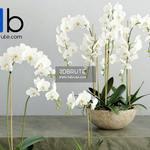447 Plant 3dmodel 3dsmax