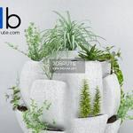 451 Plant 3dmodel 3dsmax