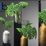 478 Plant 3dmodel 3dsmax
