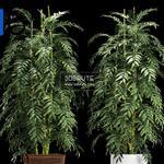 592 Plant 3dmodel 3dsmax