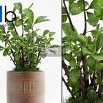 600 Plant 3dmodel 3dsmax