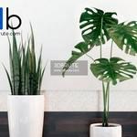 601 Plant 3dmodel 3dsmax