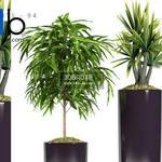 611 Plant 3dmodel 3dsmax