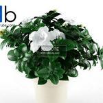 37 Plant 3dmodel 3dsmax