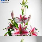 41 Plant 3dmodel 3dsmax