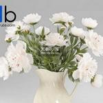 13 Plant 3dmodel 3dsmax