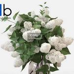 55 Plant 3dmodel 3dsmax