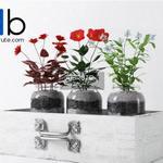 6 Plant 3dmodel 3dsmax