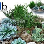 1 Plant 3dmodel 3dsmax