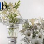 30 Plant 3dmodel 3dsmax