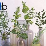 241 Plant 3dmodel 3dsmax