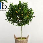 249 Plant 3dmodel 3dsmax