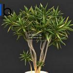 253 Plant 3dmodel 3dsmax