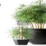 254 Plant 3dmodel 3dsmax