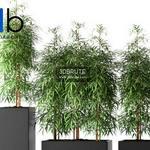 262 Plant 3dmodel 3dsmax