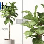 263 Plant 3dmodel 3dsmax