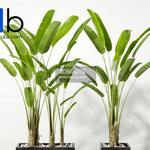 277 Plant 3dmodel 3dsmax