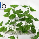 297 Plant 3dmodel 3dsmax