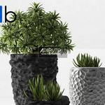 299 Plant 3dmodel 3dsmax