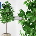 301 Plant 3dmodel 3dsmax