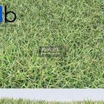 305 Plant 3dmodel 3dsmax
