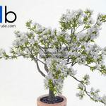 311 Plant 3dmodel 3dsmax