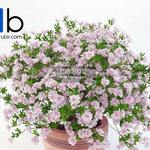 312 Plant 3dmodel 3dsmax