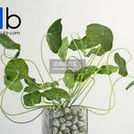 315 Plant 3dmodel 3dsmax