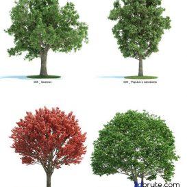 Tree - 3dsmax - Vray