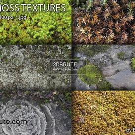 Natural materials  texture 221